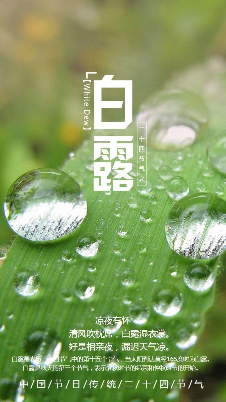 24节气文艺唯美水滴创意简约白露宣传海报