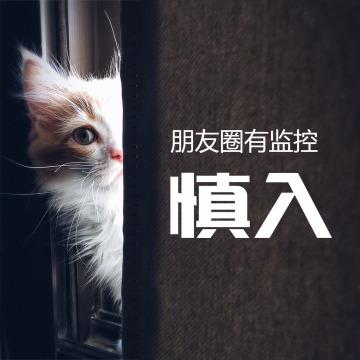 简约创意猫咪头像微信朋友圈封面
