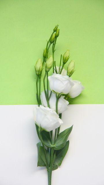 绿色小清新风格鲜花手机壁纸