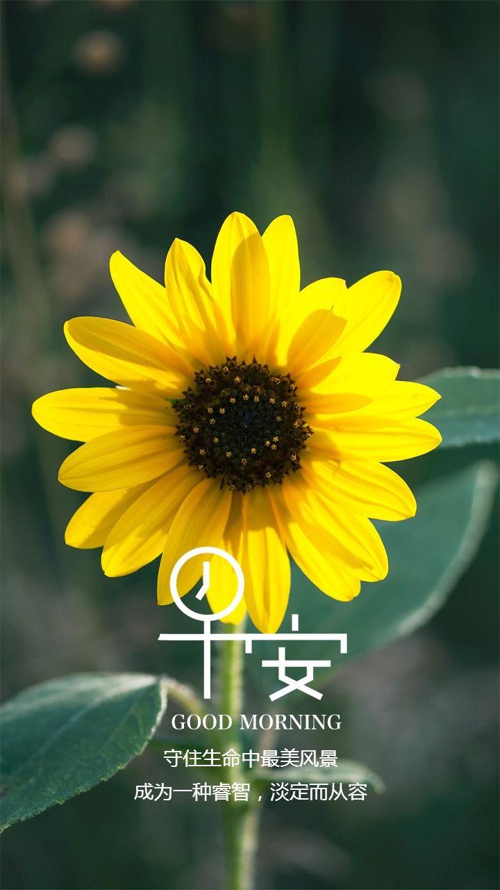 文艺唯美花朵早安日签