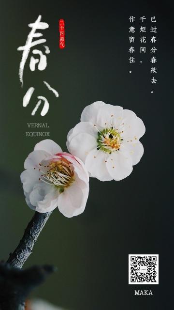 春分节气白色淡雅传统海报