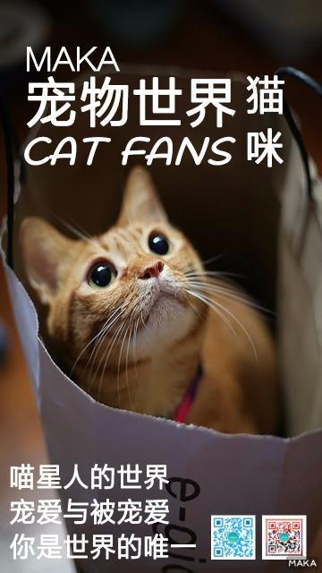 猫咪宠物世界