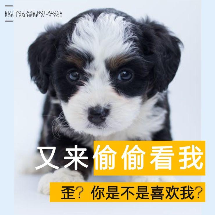 简约清新蓝色萌宠微信朋友圈封面