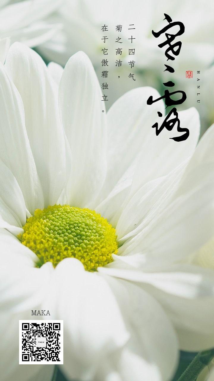 寒露二十四节气独菊白色海报