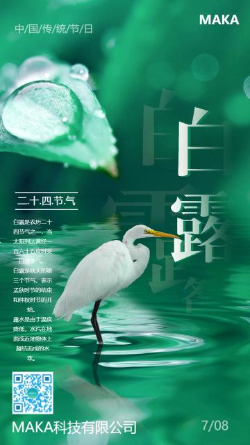 绿色简约白露传统节日节气问候手机海报模板