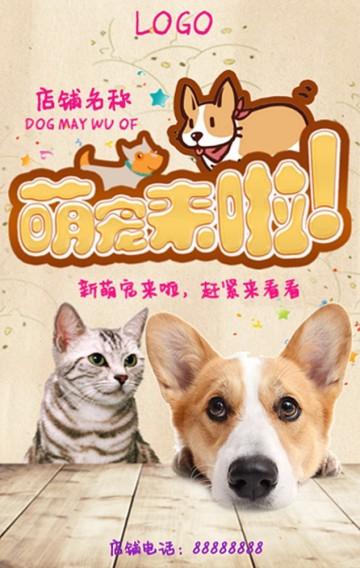 宠物/宠物店/宠物医院/萌宠/猫粮/狗粮/宠物美容/宠物店铺宣传/宠物店介绍
