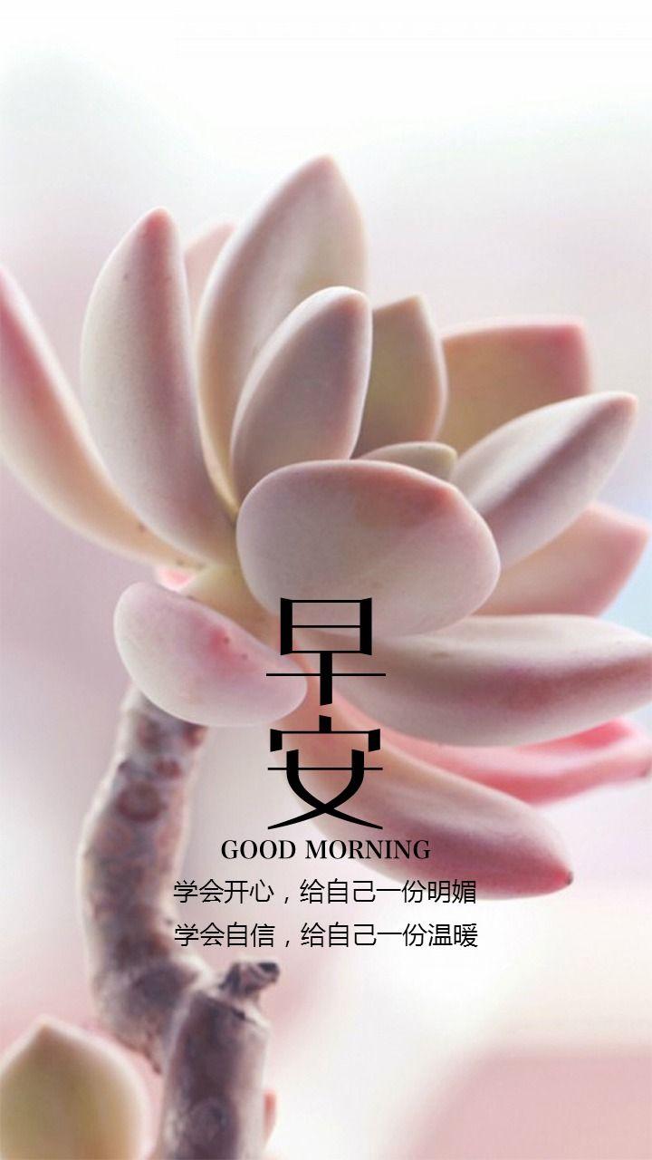 花朵背景早安日签早安问候语