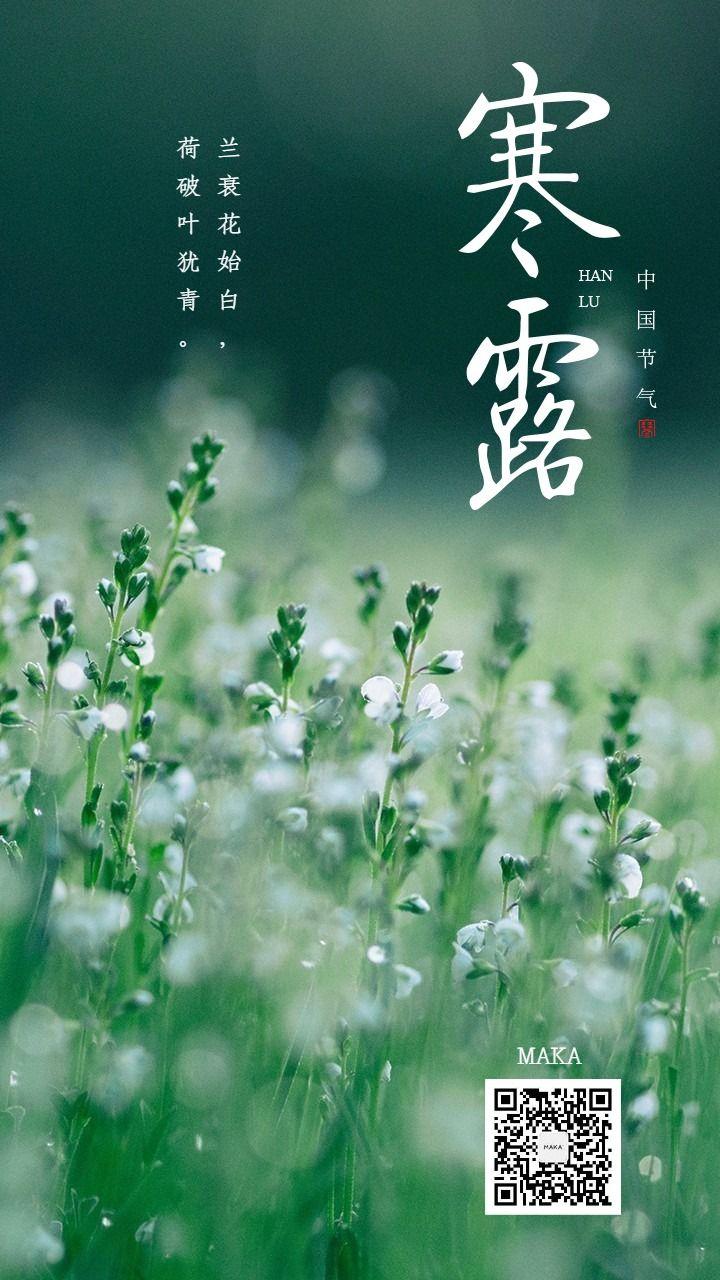寒露二十四节气绿色花草海报露水