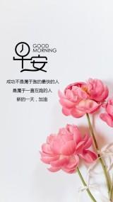 唯美花朵早安问候祝福语