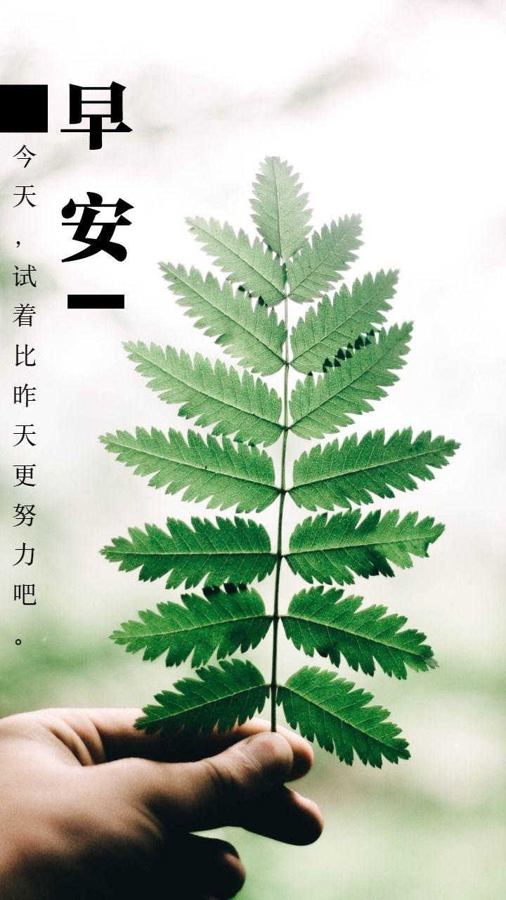 早安 励志语录 清新 日系 自然 日签