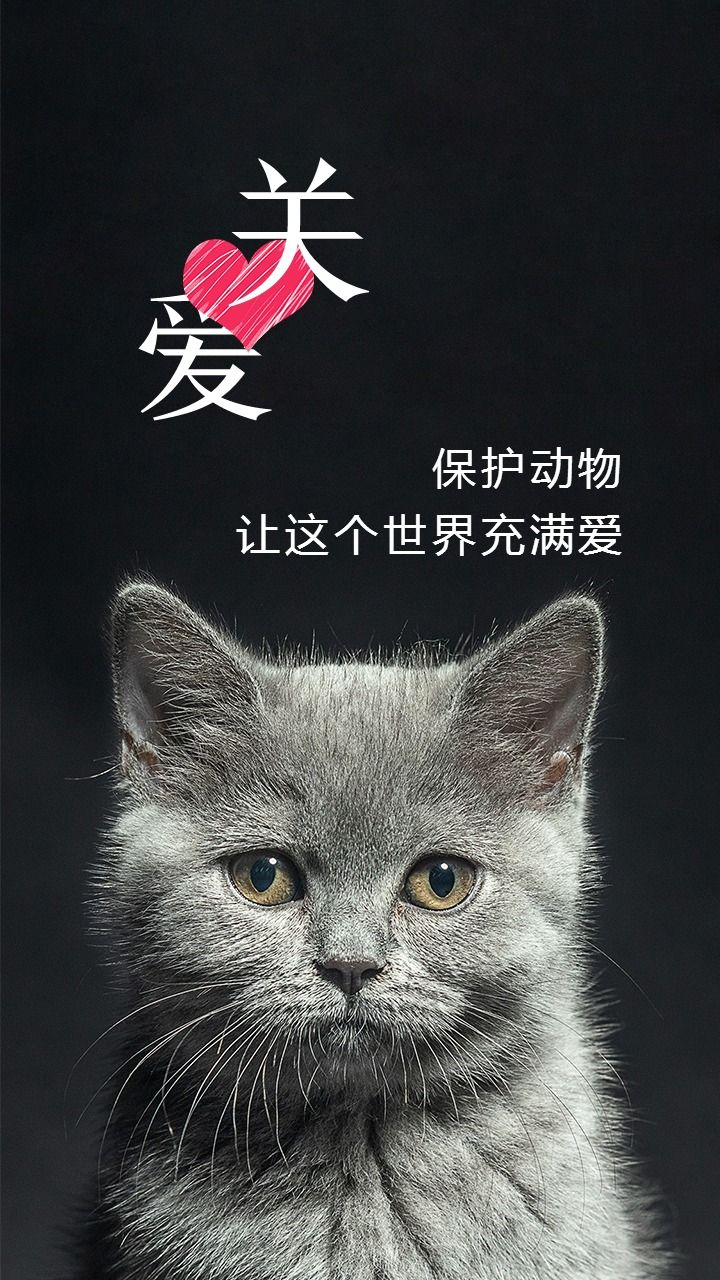 关爱生命保护动物日签海报配图