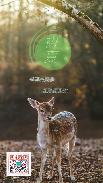 初夏简约邀请促销宣传