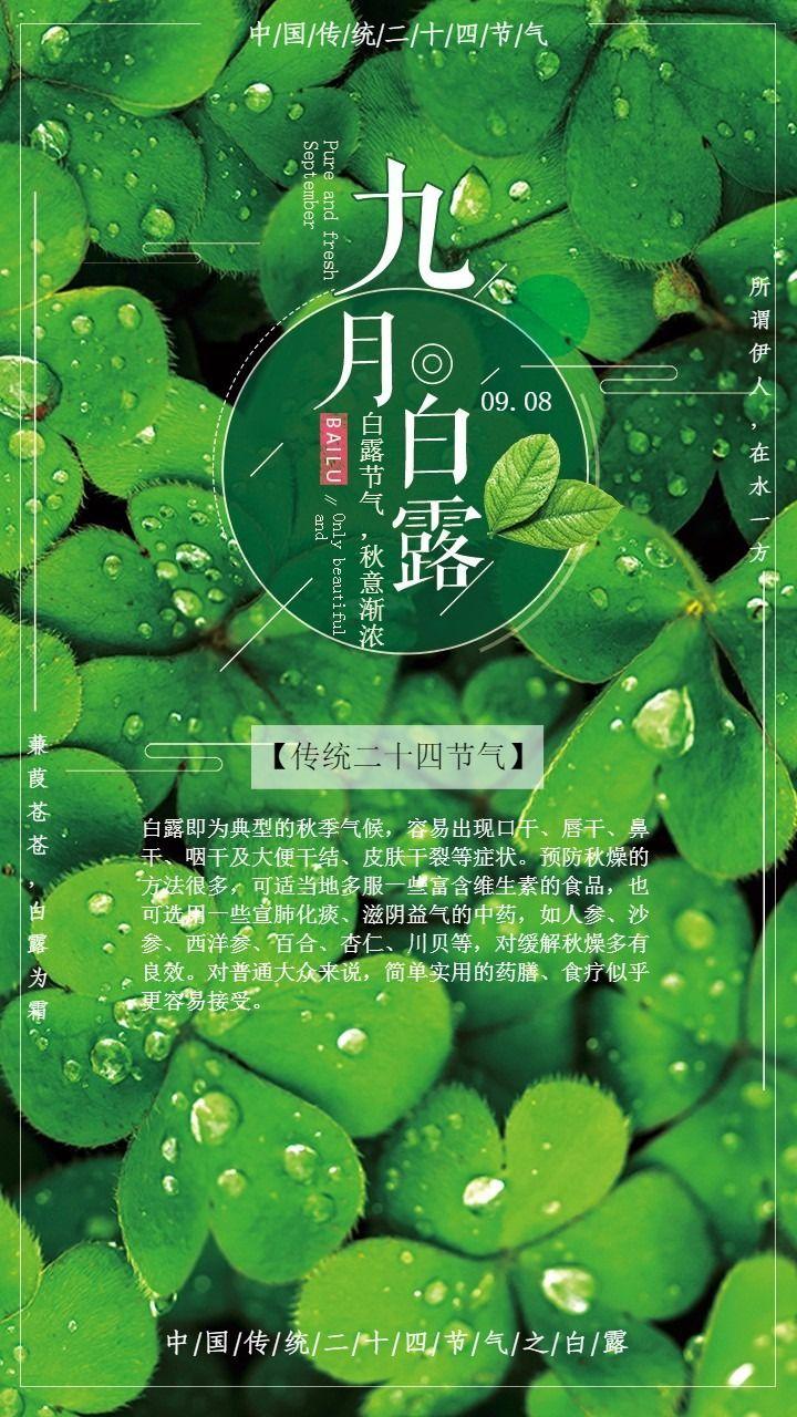 中国传统二十四节气之白露宣传海报