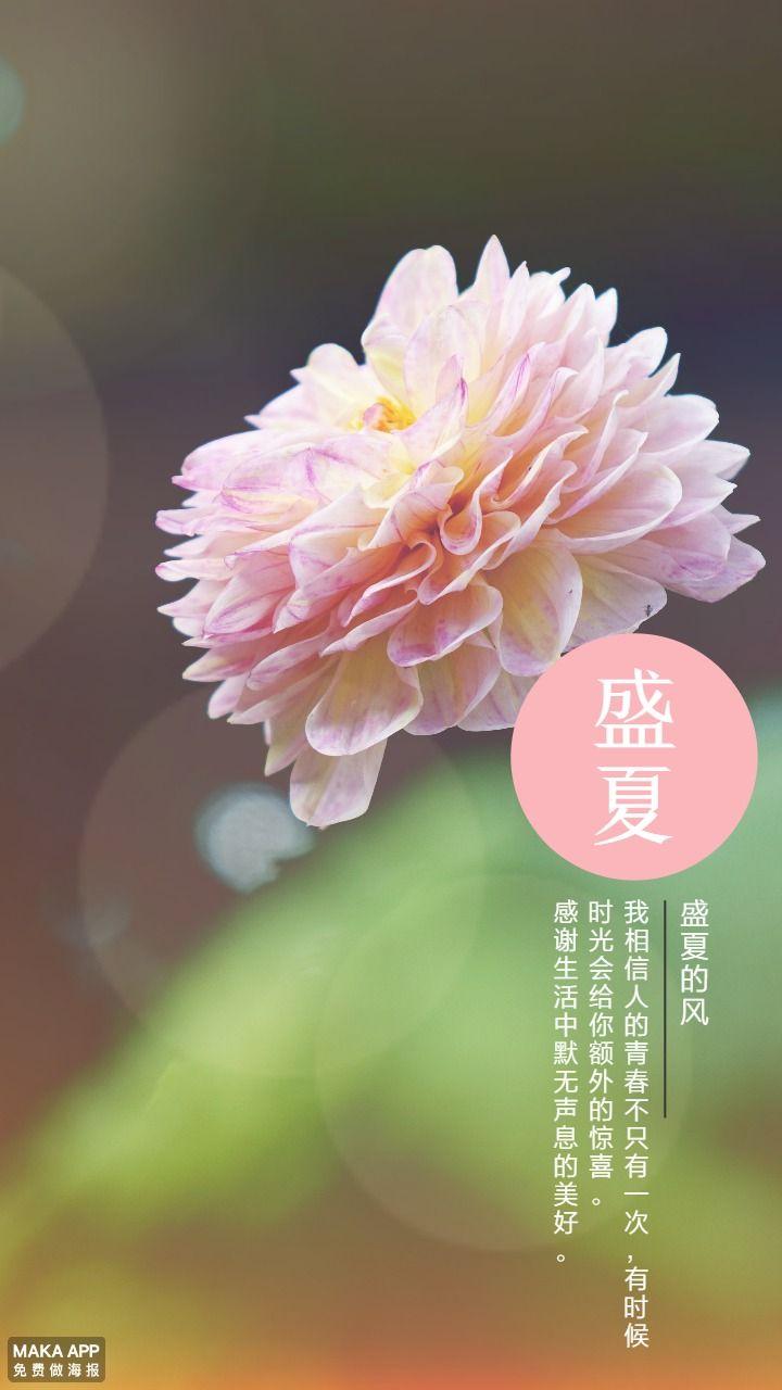盛夏时光-海报日签壁纸文艺清新花朵青春年华免费