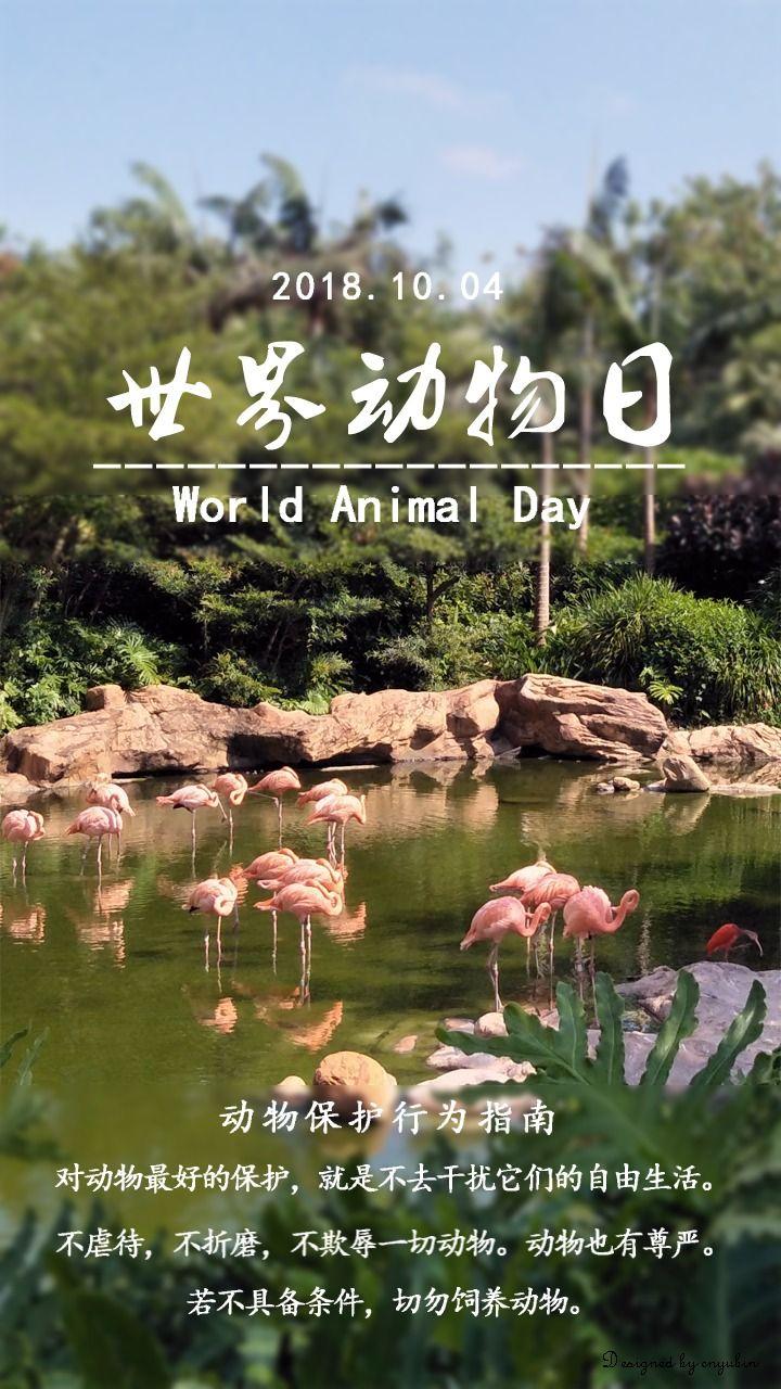 世界动物日-火烈鸟